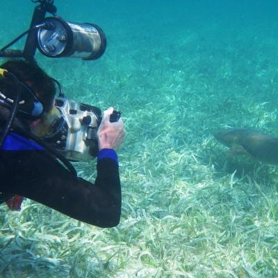 This image depicts a Projects Abroad volunteer photographing a shark during their marine conservation work in Belize.
